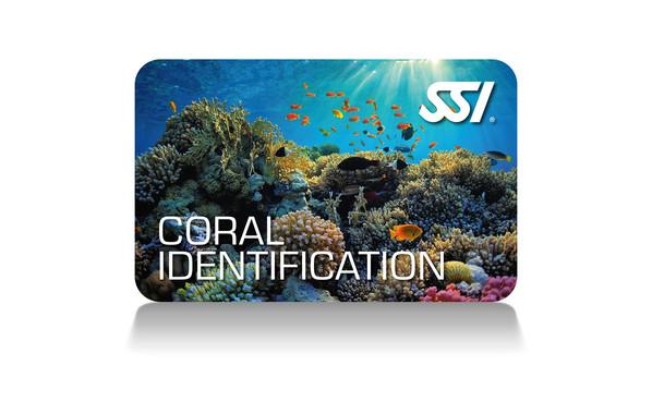 Identification des Coraux - SSI - Coral Identification