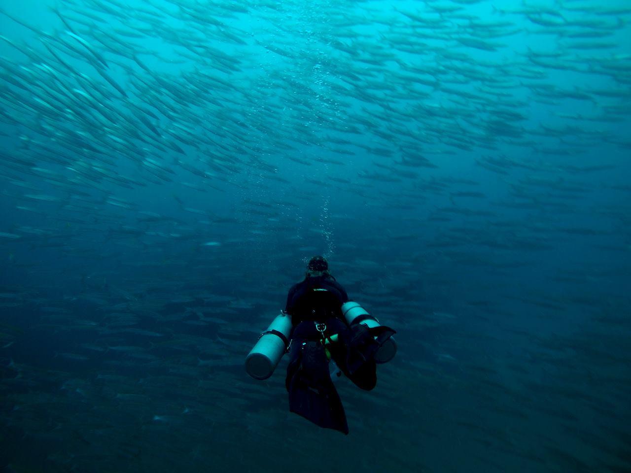 Yann-Sidemount-barracuda
