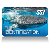 Carte de certification Identification des Poissons - SSI - Fish Identification