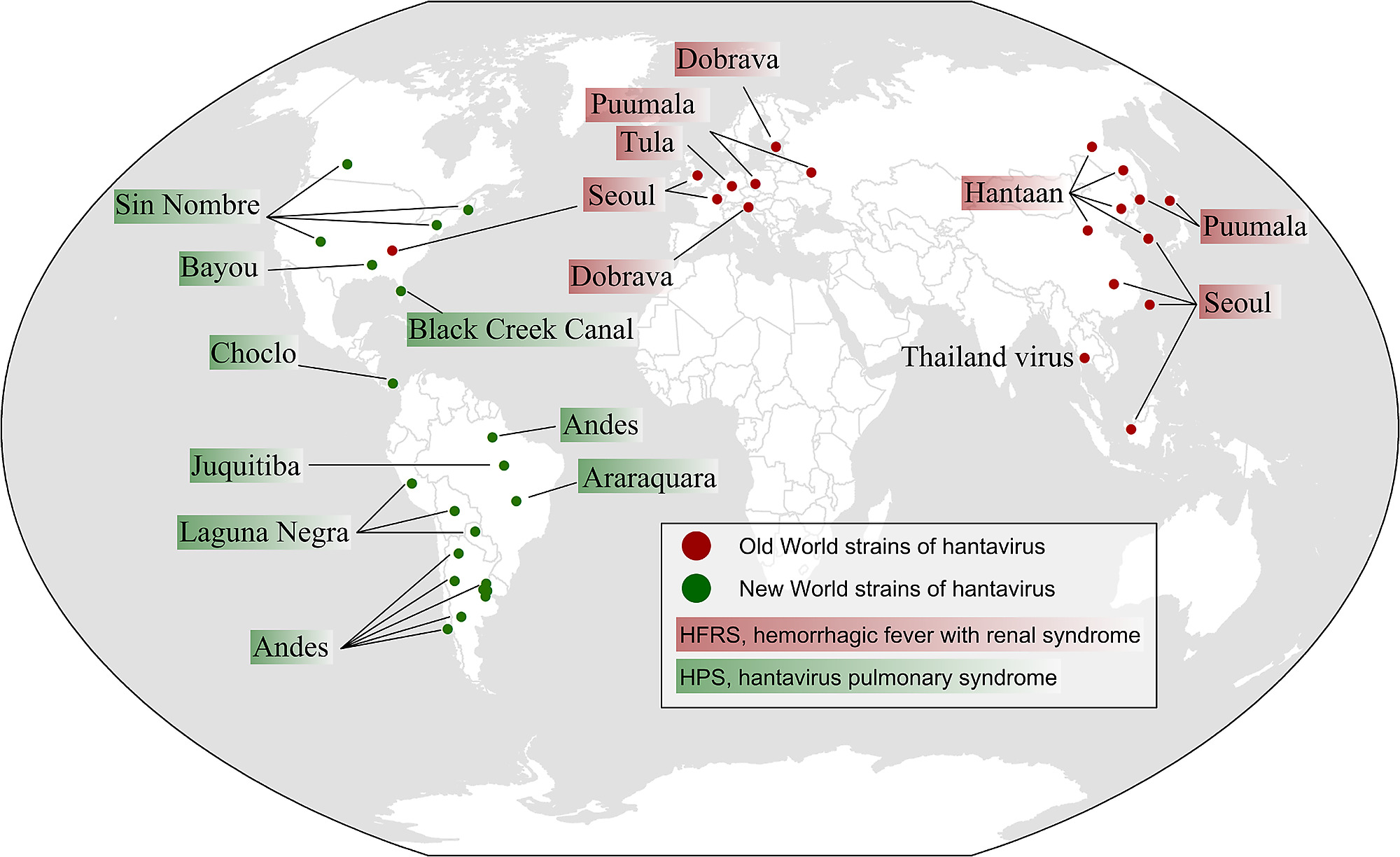 Map of Old World and New World hantavirus genotypes reported to be ...