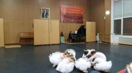 ballet-numti-koleda-2016-11