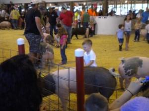 Swine pee-wee showmanship