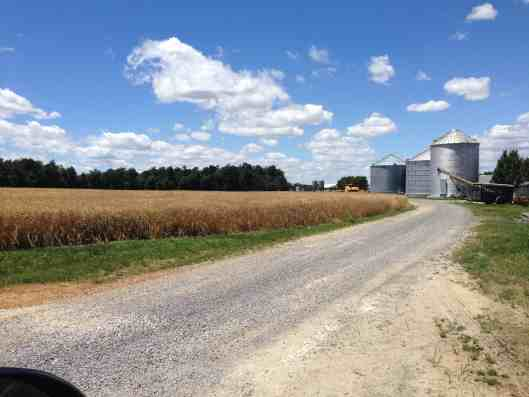 pre wheat harvest