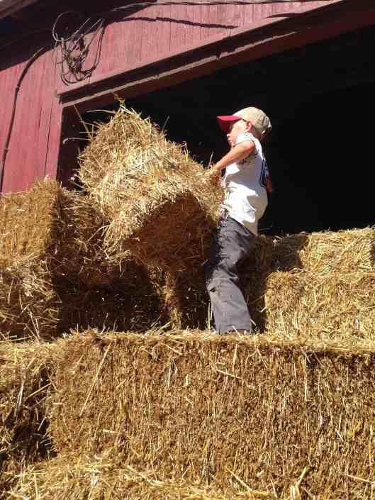 unloading bales of straw