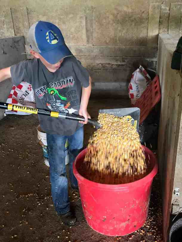 mixing dairy feeder feed by hand