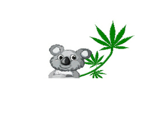cloudcannabismuskegon49445