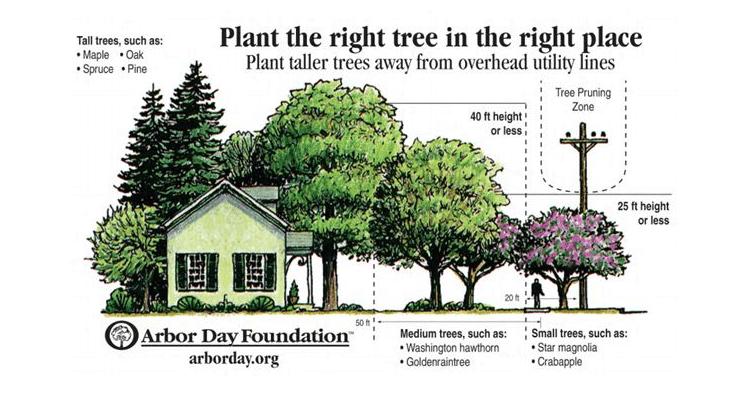 energy saving trees