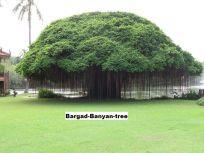 Bargad-Banyan-tree
