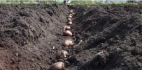 planting-seed-potatoes