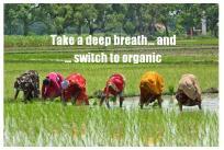 Switch to Organic