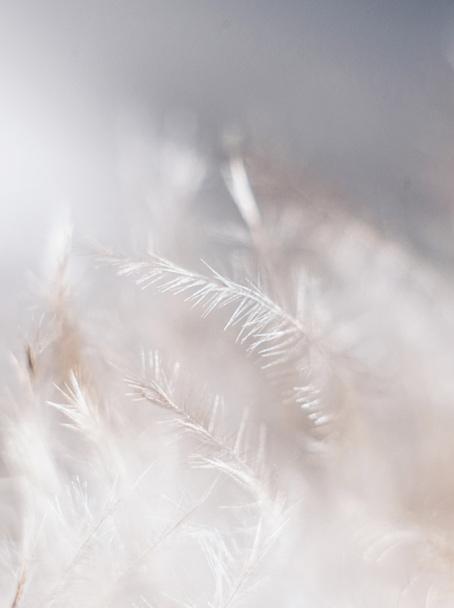 Inspiration Blanc Ciel