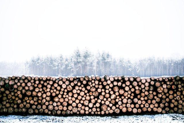 Deforestación 2