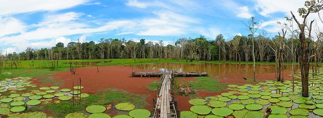 deforestacion-brasil