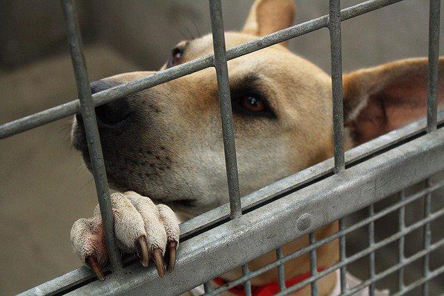 perros cárcel