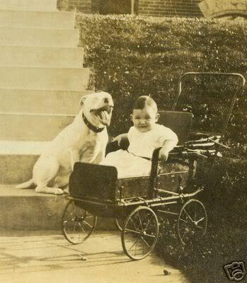 pitbull era una raza para cuidado de niños