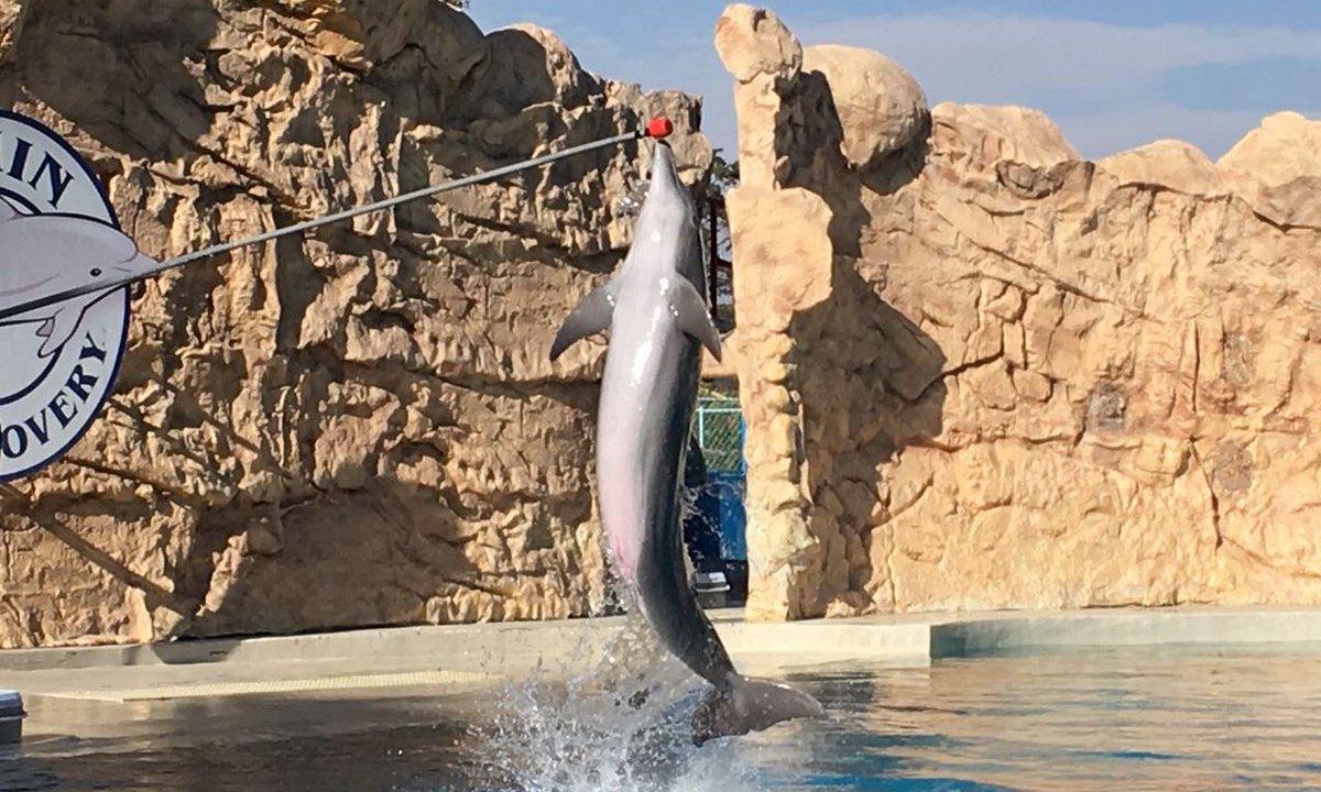 Delfinoterapia, prohíben delfines, prohíben delfines cmdx, six flags