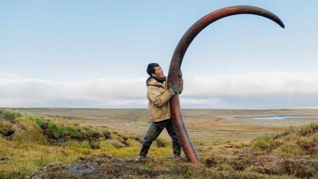 marfil mamut colmillos rusia china trafico ilegal