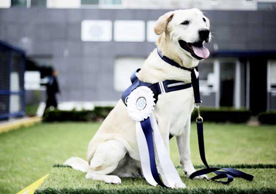 condecoran a René perro policía enfermedad terminal