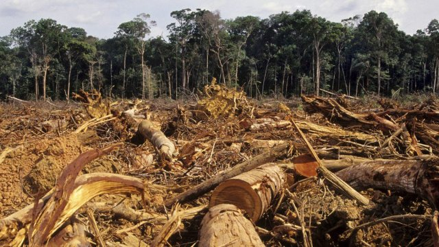 deforestación méxico aumenta 30 por ciento