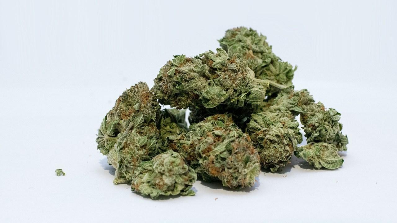 ¿Cómo cultivar, producir y consumir marihuana legalmente en México?