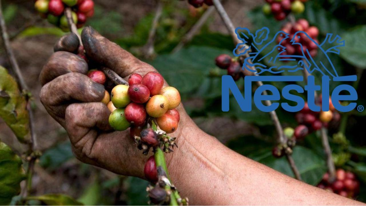 Cafetaleros de Veracruz se oponen a fábrica de Nestlé