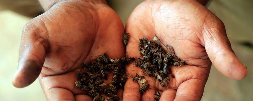 Apicultores exigen declarar emergencia por muerte de abejas en Yucatán - Plumas Atómicas