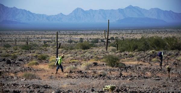 Águilas del Desierto; ellos rescatan migrantes en Arizona