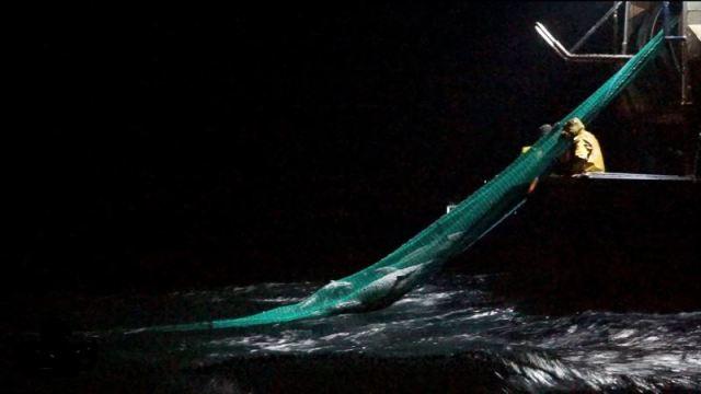 Más de 600 delfines aparecen muertos en Francia