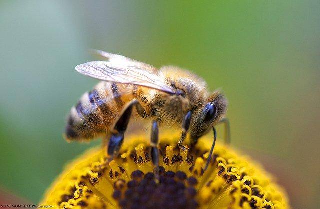 abejas, cuidado, primavera