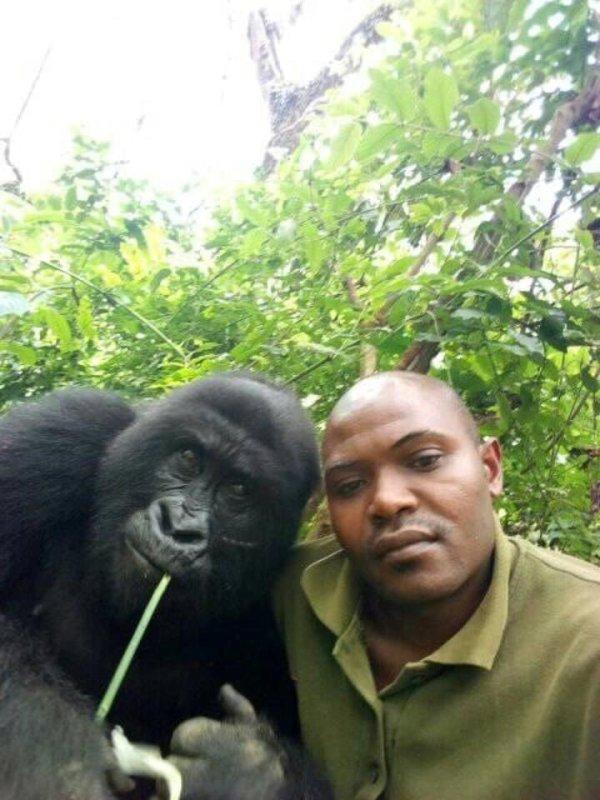 gorila, selfie, guardabosque