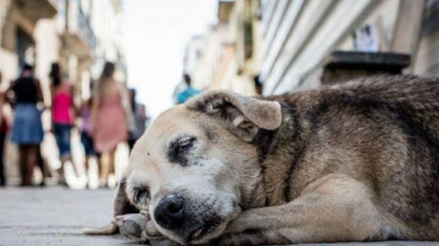Diputada propone eliminar perros callejeros en Puebla