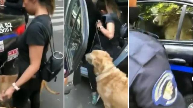 Policías detienen a perros por jugar en fuente de Condesa