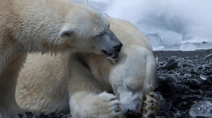 extinción masiva, extinción