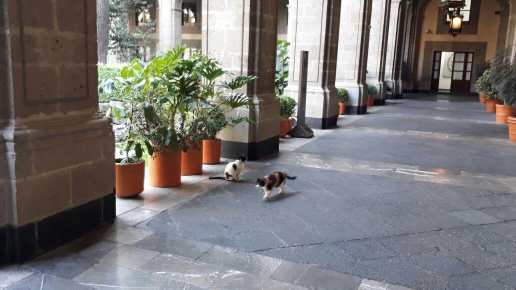Palacio Nacional quieren matar a 20 Gatitos