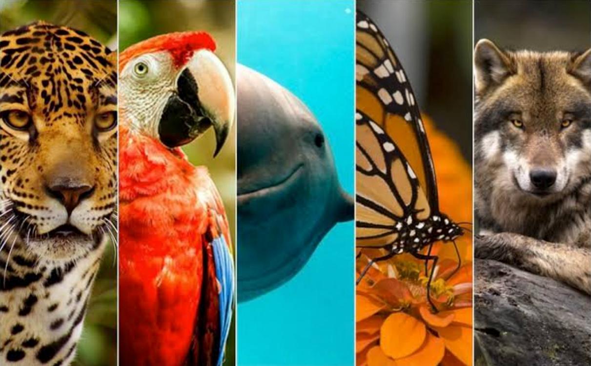 México es el país con más especies en peligro de extinción