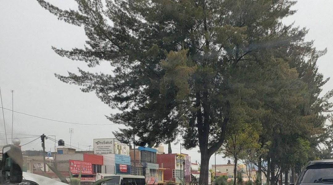 Talan 430 árboles