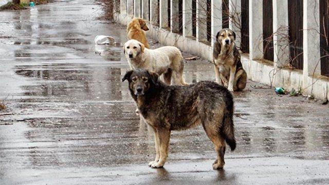 En Turquía la mayoría de los perros callejeros viven en buenas condiciones