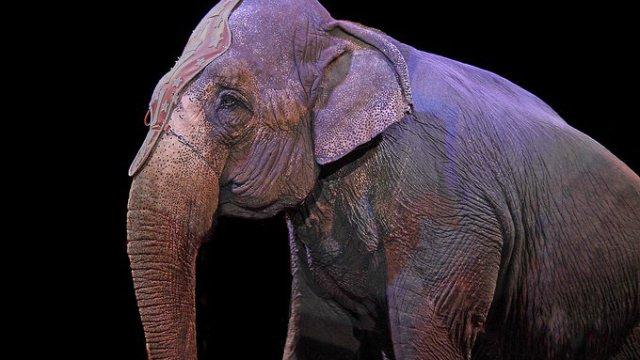 diputados quieren regresar a los animales a los circos