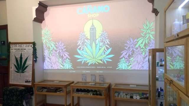 Este es el museo del cáñamo y la marihuana de la CDMX