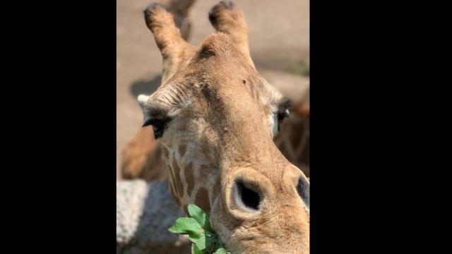 Un día en la cocina del Zoológico de Chapultepec