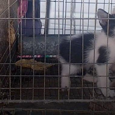 Así maltratan animales en este tianguis de Chalco