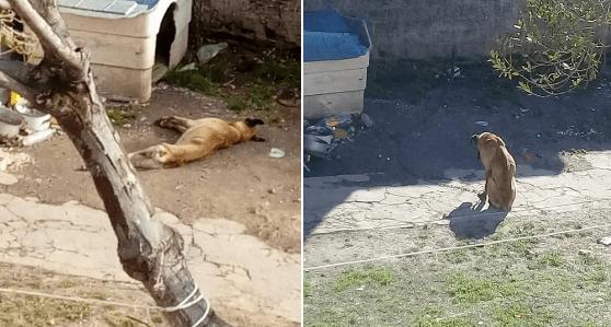 Multa a quien maltrate o abandone mascotas en Chihuahua