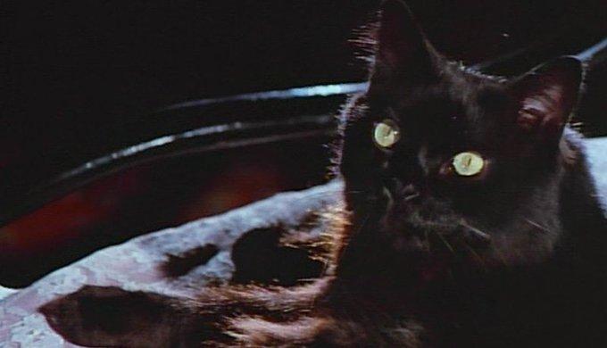 Por qué se celebra hoy el día internacional del gato