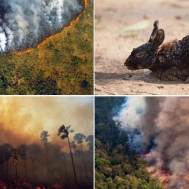 ¿Por qué Bolsonaro culpa a las ONG del incendio del Amazonas