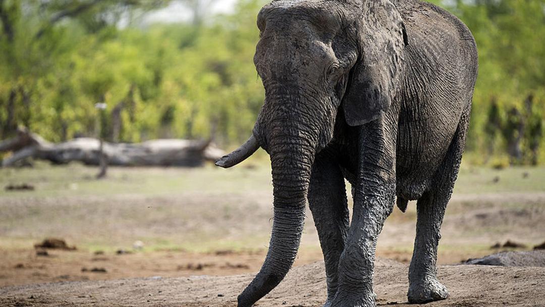 21/10/19, Elefantes, Muertos, Sequía, Zimbabwe