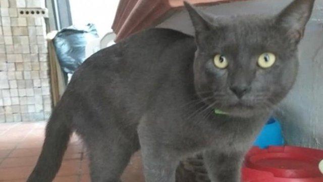 ¿Pixi o Huarache? Este gatito tiene dos casas y dos nombres