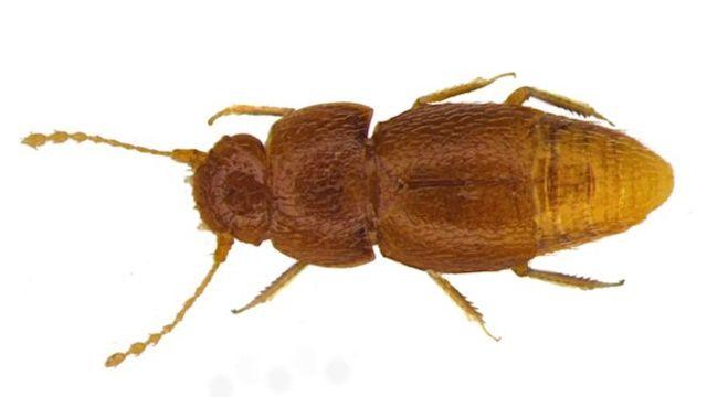 25/10/19 greta-thunberg-insecto-nombre/ insecto