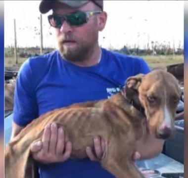 A un mes del huracán Dorian en Bahamas, rescatan a perro