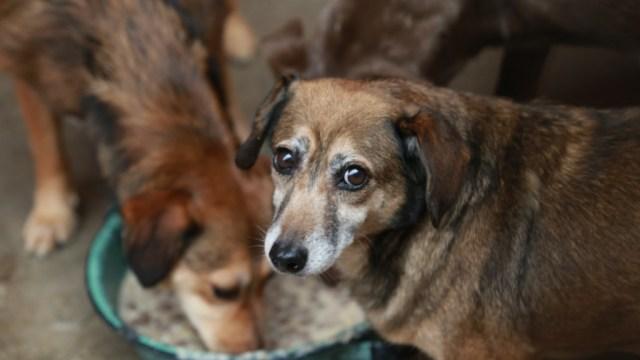Envenenan a ocho perros en Amecameca; rescatan a dos