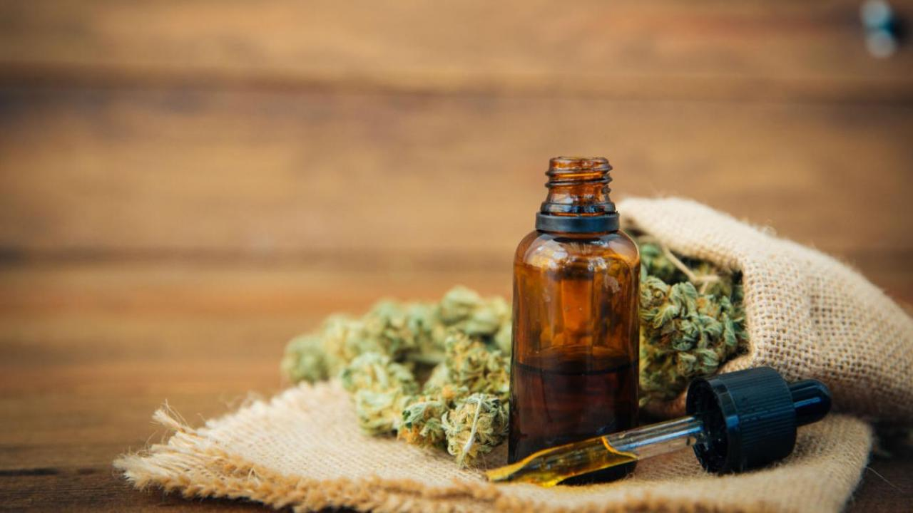 Aceite de cannabis alivia dolor de enfermedades como cáncer